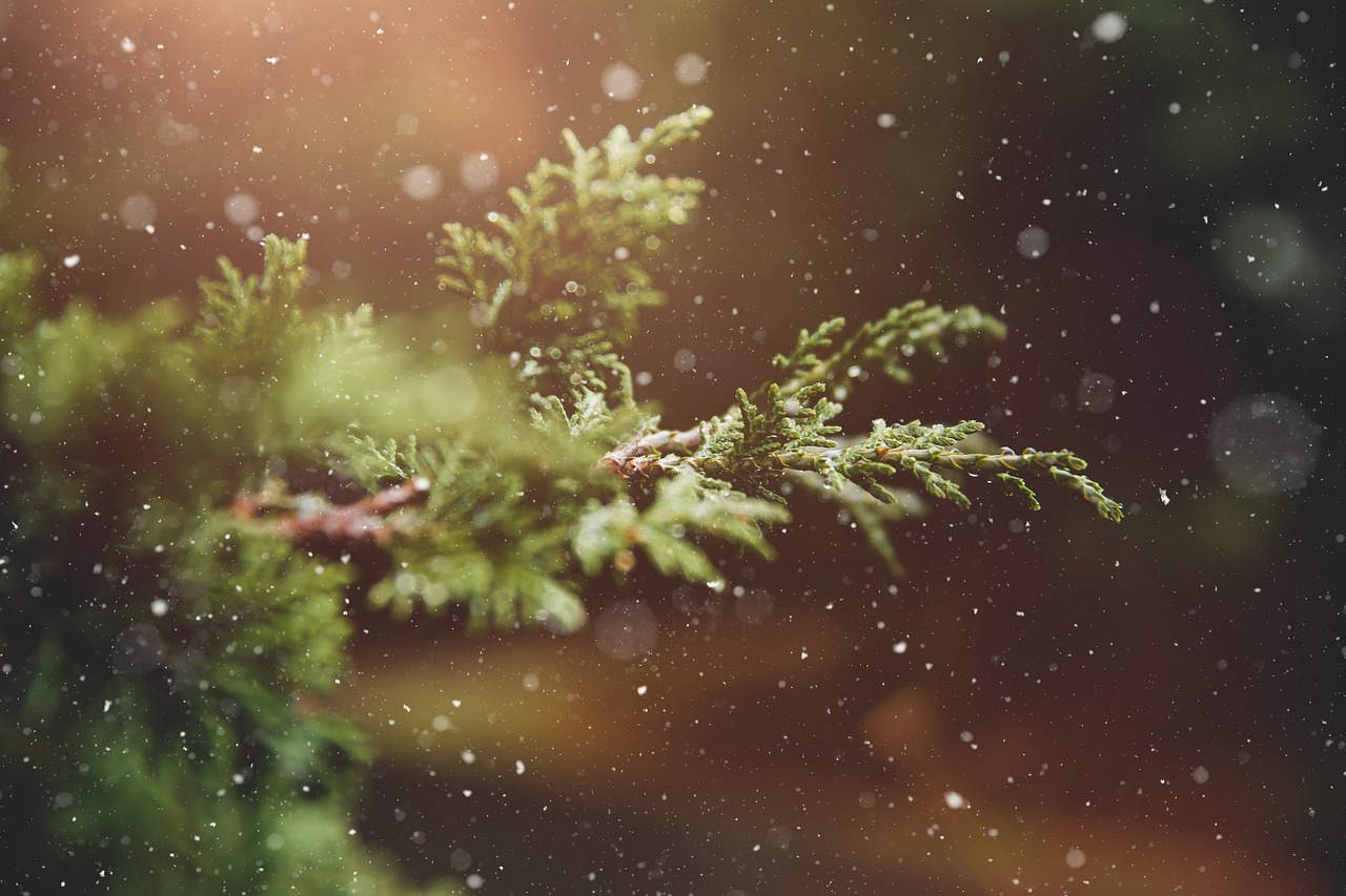 winter-1791370_1280